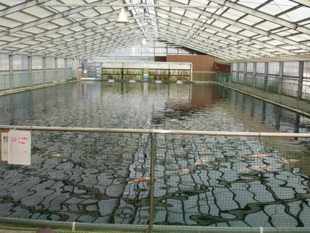 Koi Pond Filtration - Food for Thought Bakkishower_backdrop